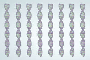 PCR ©2008 Genetic Science Learning Center, University of Utah, http://learn.genetics.utah.edu